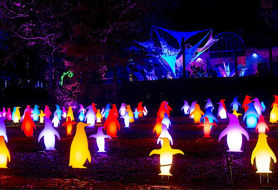 Holiday festival of lights at the PhillyZoo Penguin Field